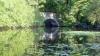 Frodo and Hobbiton: Kayaking on Lake Waban at WellesleyCollege