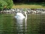 640 9A-swan