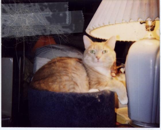 My second cat Milo, RIP