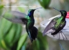 Learning life lessons from those fiesty hummingbirds