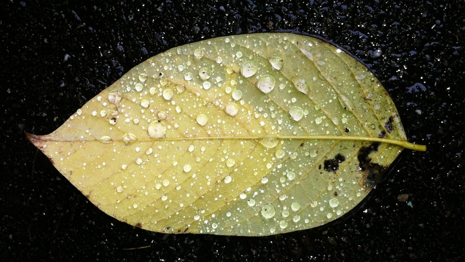 leaf with drops featured