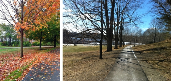 Fall and Winter trees at Wellesley College