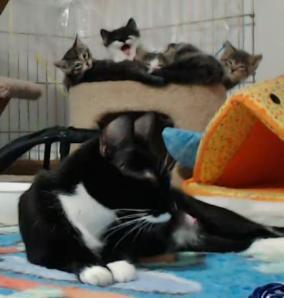 ripley's kittens