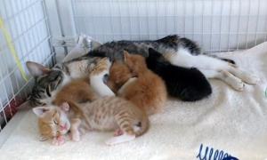scientist kittens