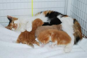 spice kittens milk bar