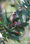 A break from the ice and snow: beautifulbirds