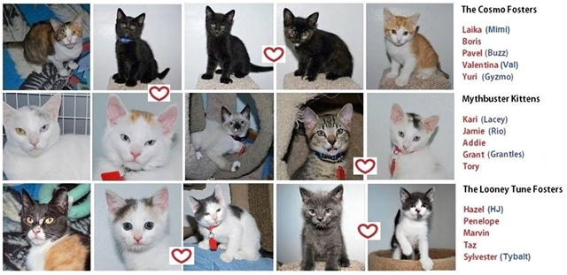 Various litters from the Critter Room from https://www.facebook.com/TheCritterRoom