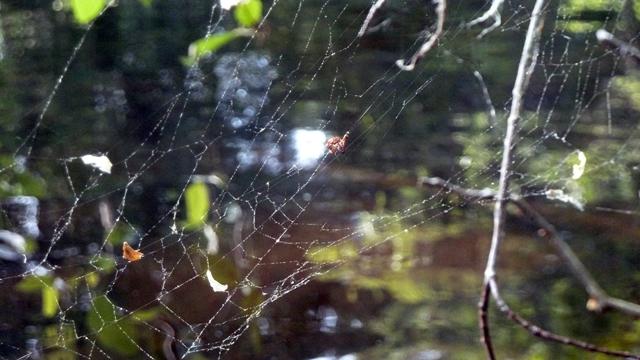 640 spider web