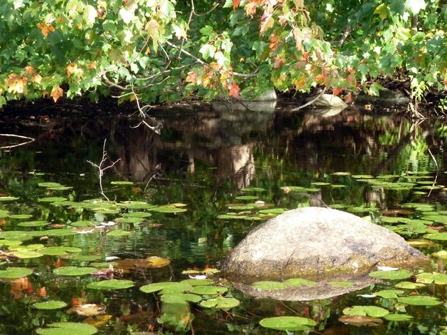640 rock rocky pond