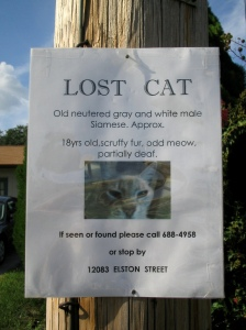 JudeanPeoplesFront day 46 - lost cat