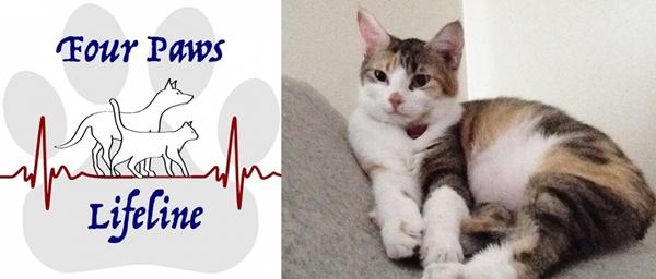 4 paws lifeline logo-horz