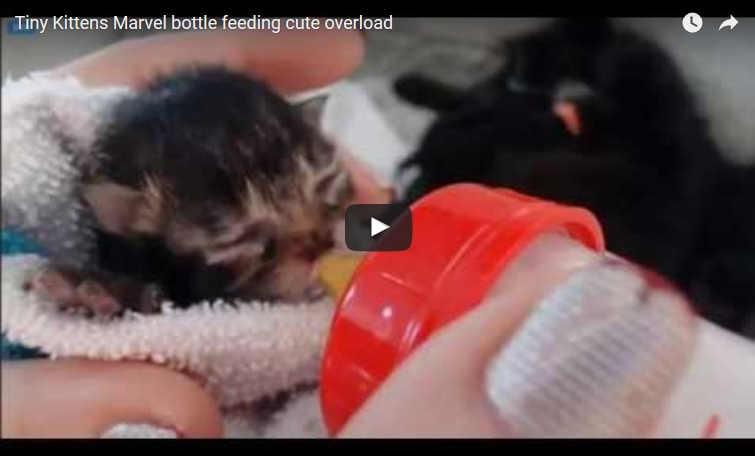 marvel bottle feeding