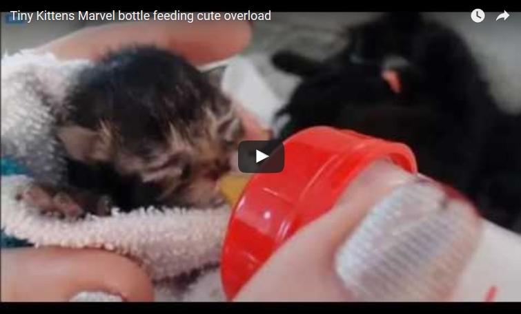 marvel bottle feeding