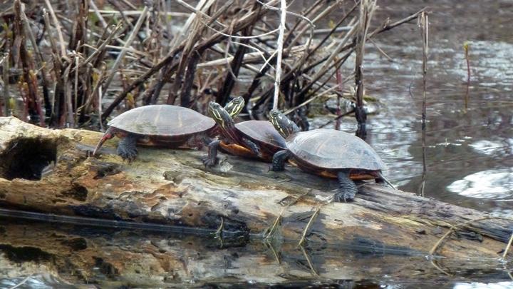 turtles2-720