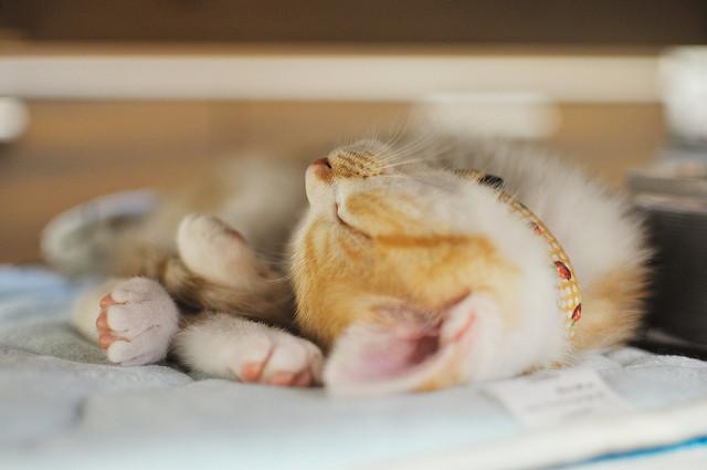 yoppy sleep, Flickr Creative Commons